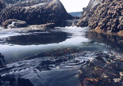 Hot-Springs-Cove-Tofino